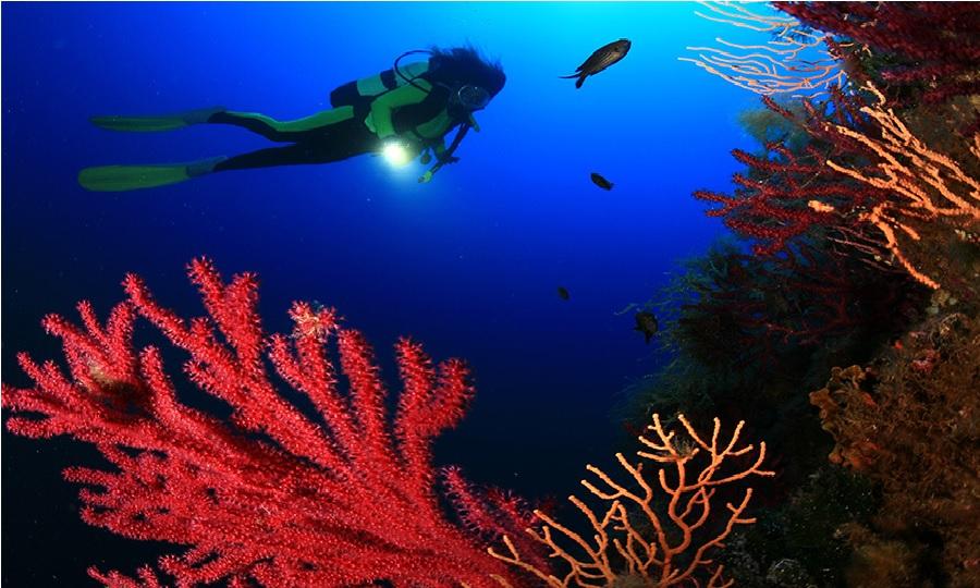 Plongeuse - Club de plongée Incantu Galeria Corse
